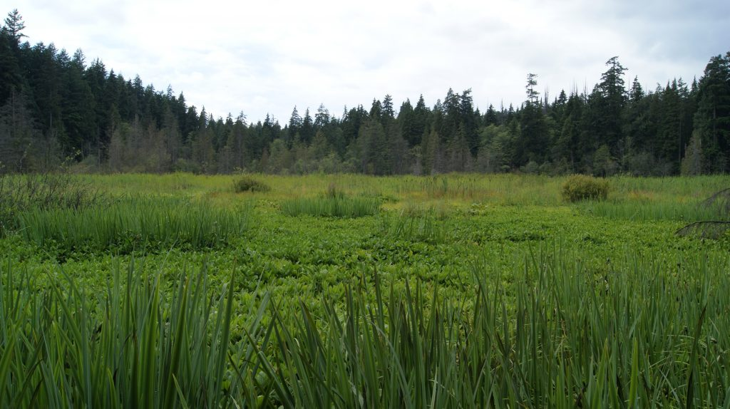 Beaver Lake Restoration Plan