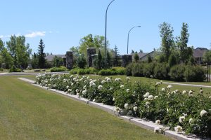 Okotoks Cemetery Land Needs Assessments