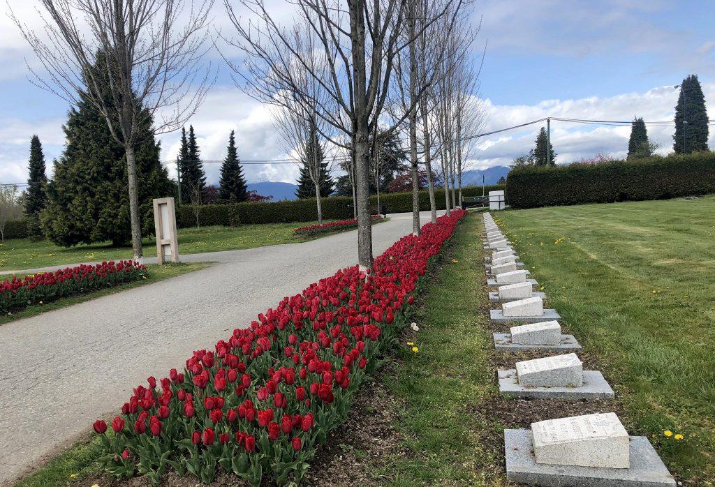May 5 Tulips